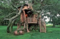 cabane arbre design