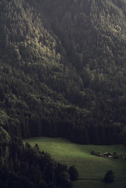 paysage foret montagne