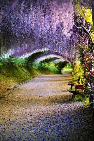 tunnel fleurs