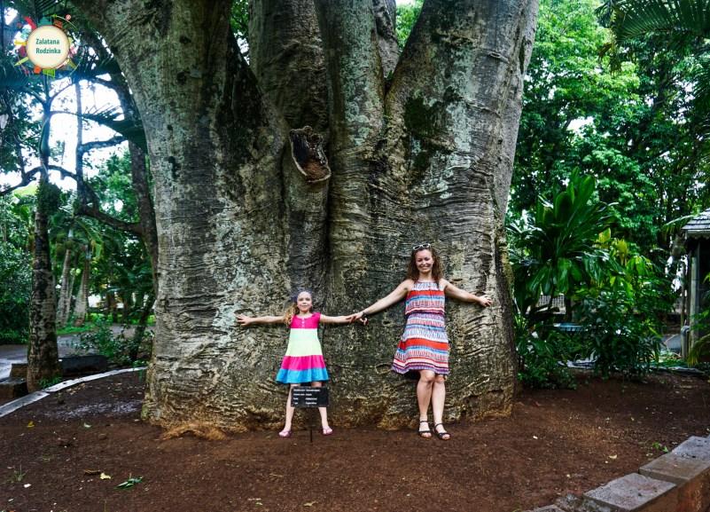 baobab mauritius