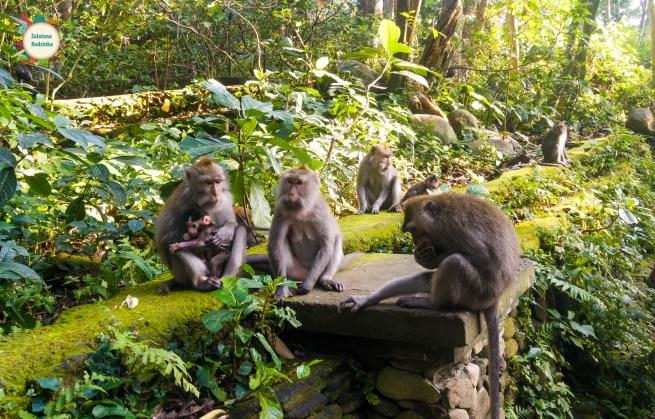 las małp bali