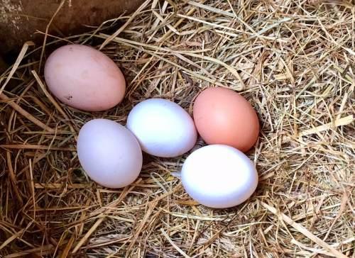 Huevos en Mercado Local de Tablón de anuncios