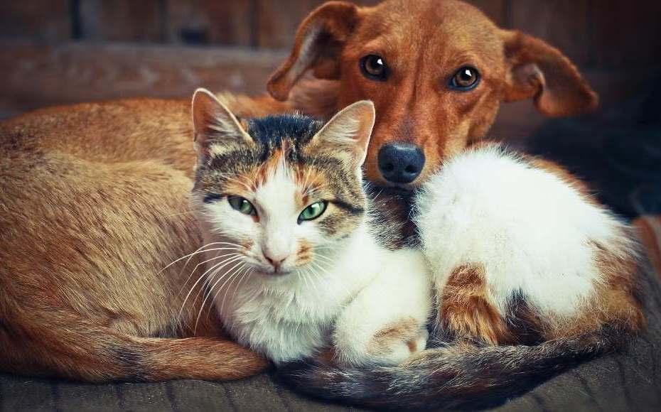 adottare animali domestici
