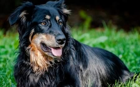 adottare cane adulto