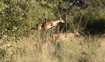 6-Day Mpala Safari (Southbound) - RACK