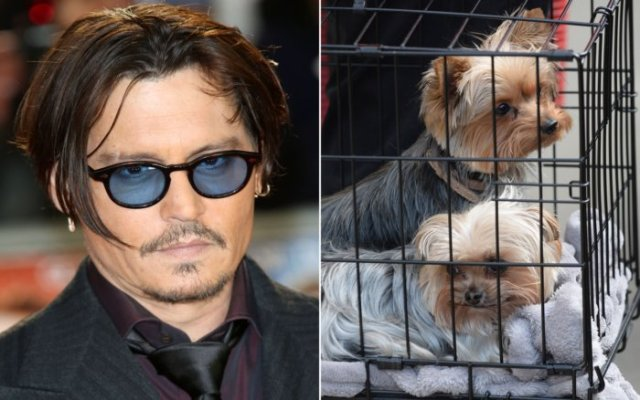 Johnny Deep a Venezia 72: Ho ucciso i miei cani e li ho mangiati