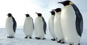 I pinguini a Superquark