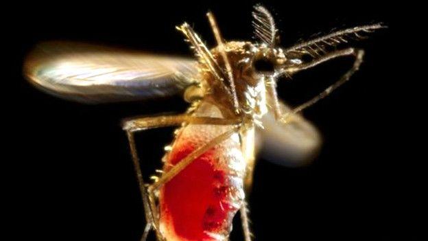 I casi di Zika in Italia sono arrivati a 52