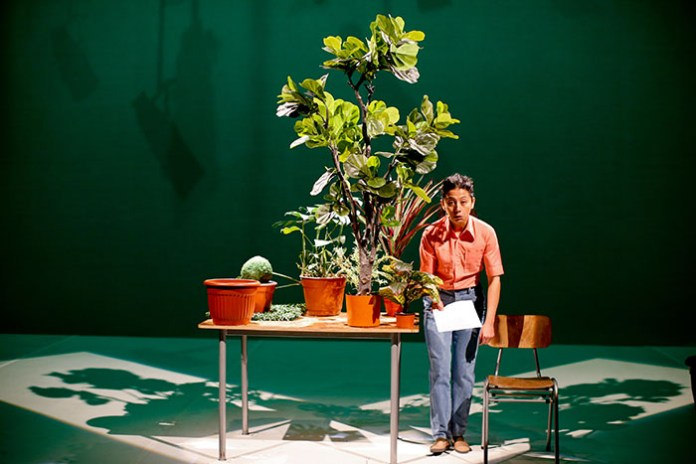 Estado vegetal