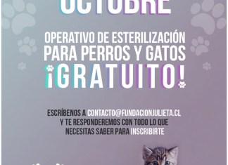 esterilización para perros y gatos