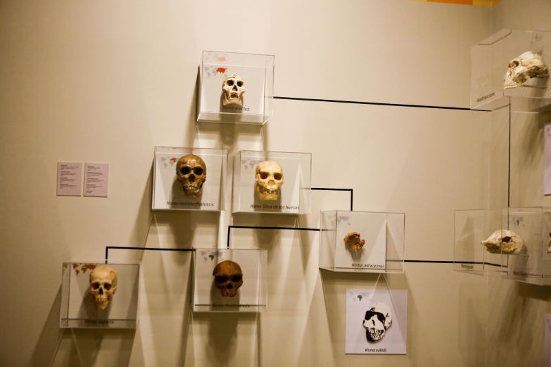 Museo de Ciencias Naturales de Zaragoza - Restos del yacimiento de Murero en Daroca provincia de Zaragoza