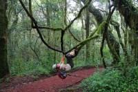 Mount Kilimanjaro Marangu3 route Tanzania Zara Tours 3 1
