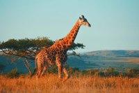 Serengeti Flying Safari Tanzania Zara Tours 4