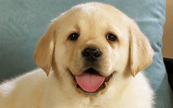 picture of cute puppies | Newwallpapers.org