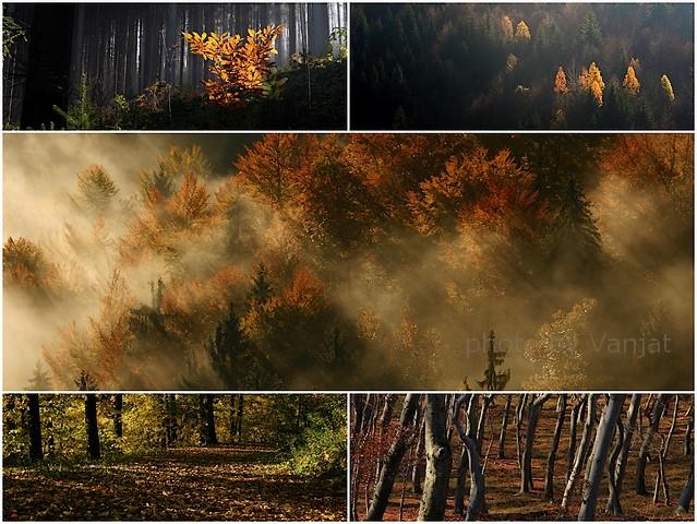 Lepljenka Gozd jesen mm