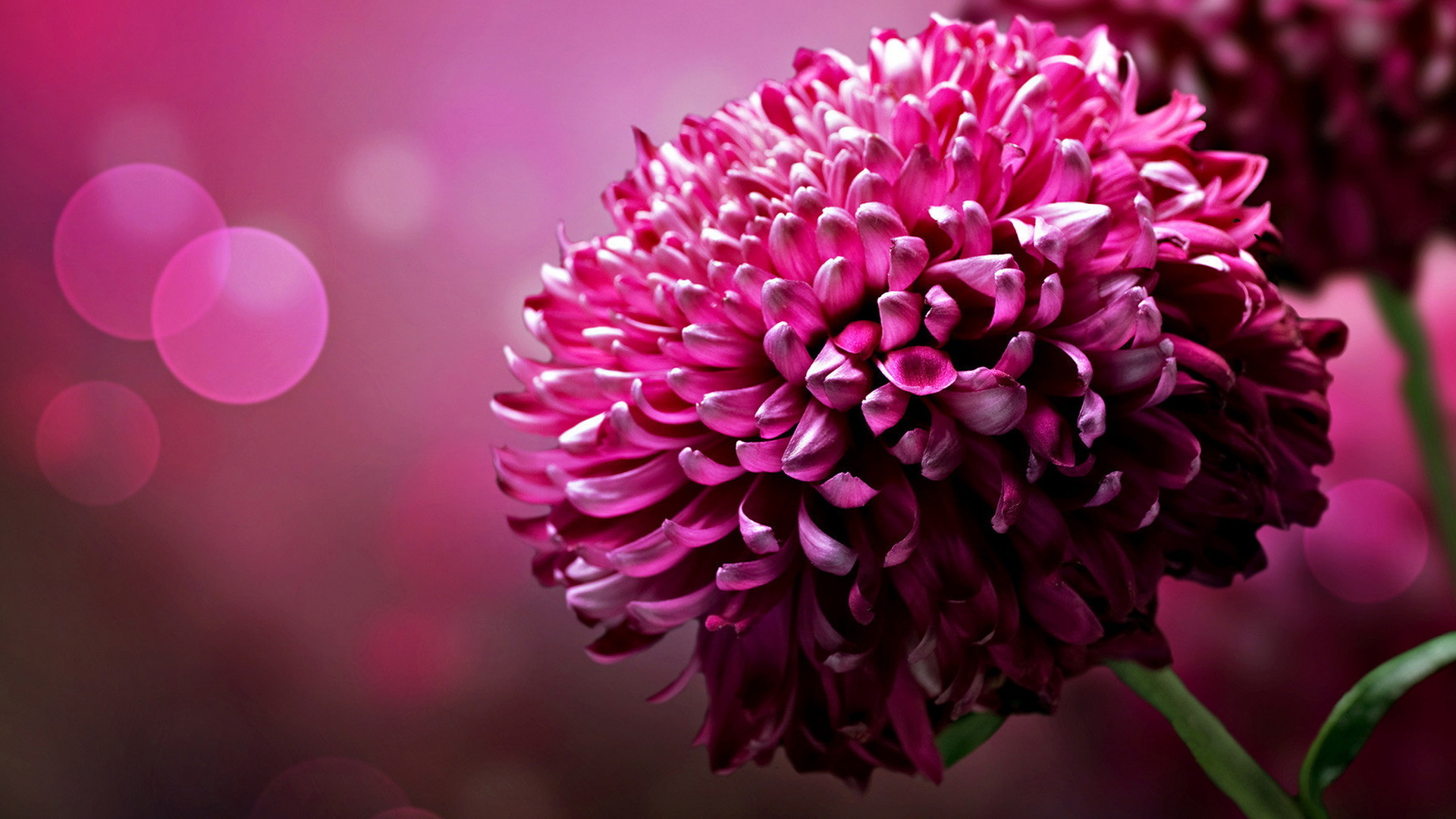 Large Flower Desktop Wallpapers 1920x1080