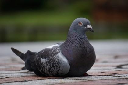 まばたき 鳥