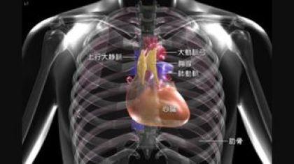 心臓の位置 中央 わずかに左寄り