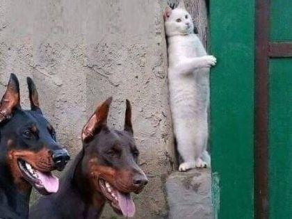 猫と犬の会話