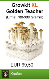 Mushroom Growkit XL Golden Teacher