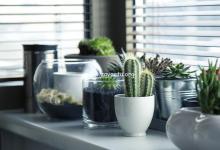 Photo de Plants At Your Work Place Keeps You More Productive
