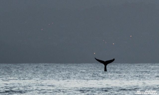 #ZayActu : Grand hommage des ami(e)s d'Océane sur la plage des surfeurs à Tartane | ZayRadio.org