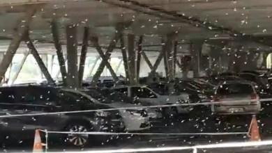 Photo of Invasion d'abeilles dans un parking du centre commercial La Galleria
