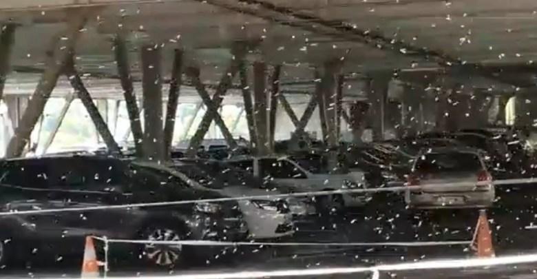 Invasion d'abeilles dans un parking du centre commercial La Galleria