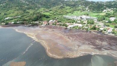 Photo of Algues sargasses : l'ampleur de la catastrophe au Robert en photos