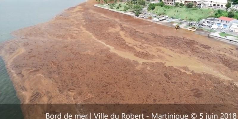 Algues Sargasses : vue aérienne impressionnante des quartiers du Robert