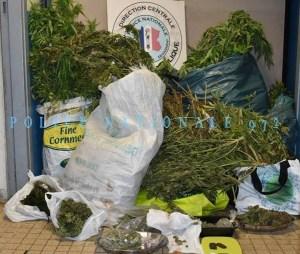 325 plants de cannabis découverts dans une maison à Balata à Fort-de-France