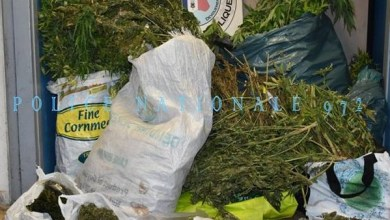 Photo of 325 plants de cannabis découverts dans une maison à Balata à Fort-de-France