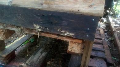 Photo of Poissons et lapins morts, le Jardin Partagé de Trenelle Citron de nouveau vandalisé