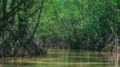 Photo of Mayotte : un violeur en série interpellé après une chasse à l'homme dans une mangrove