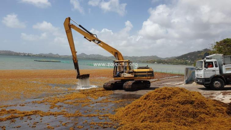 Nettoyage du bord de mer au Robert