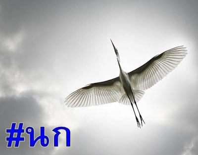 นก คืออะไร