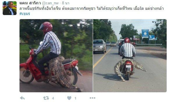 crocodile-ride-on-motorcycle-01