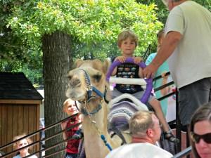 Brooks on camel