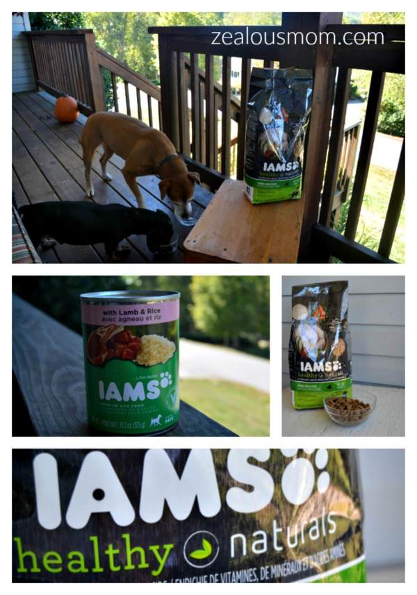 8 Ways to Lengthen Your Dog's Life @zealousmom.com