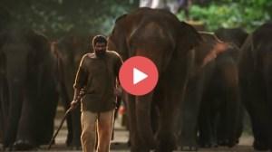 Haathi Mere Saathi Teaser: Rana Haathi Mere Saathi Teaser Released 8