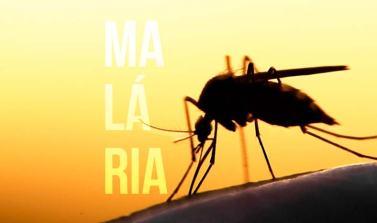 Nova molécula interrompe ciclo de vida do parasita da malária