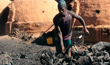 TRF-1 condena carvoaria em Eldorado do Carajás que servia água de animais para os funcionários