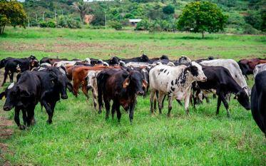 Marabá: Sempror realiza Dia de Campo do Projeto Leite a Pasto na Palmares II
