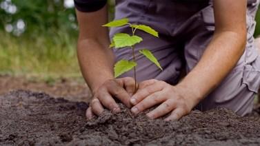 Plantio de mudas, live e blitz educativa na Semana do Meio Ambiente em Canaã