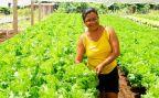 Parauapebas: Vale realiza roda de conversa virtual em comemoração ao Dia do Agricultor Familiar