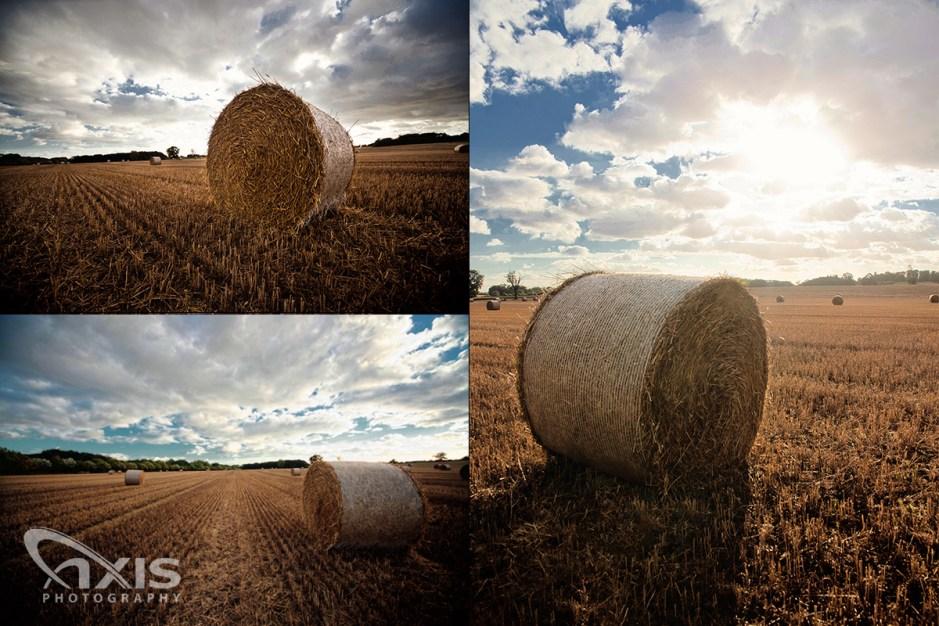 hay-field-03