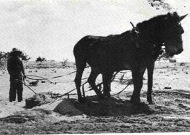 יישור חולות לבניה בתל-אביב 1909