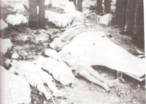 מהרוגי-דיר-יאסין