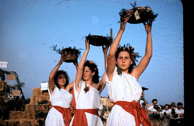 800px-PikiWiki_Israel_5423_Shavuot_holiday