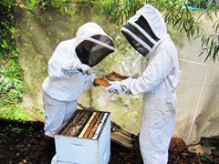 Hands on beekeeping workshops